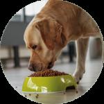 alimentazione artrosi cane
