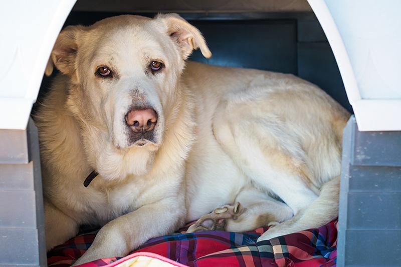 foto di cane anziano con artrosi