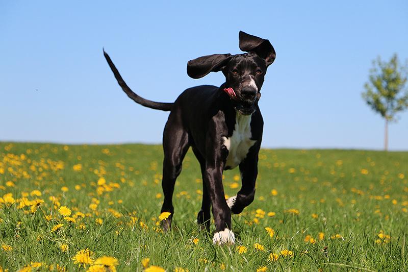 Foto cucciolo di cane - esterno