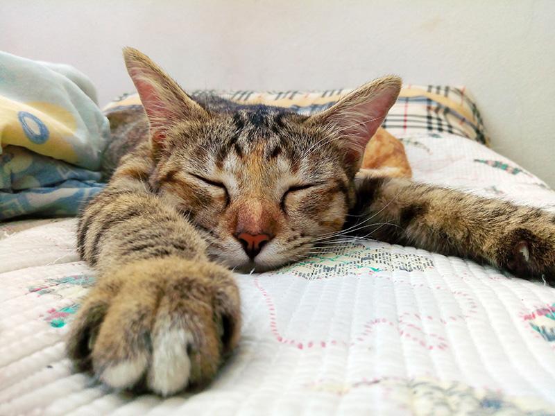 foto di gatto con arrosi
