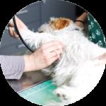 foto visita ortopedica cucciolo cane