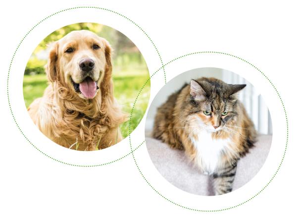 Cane e gatto con dolore articolare