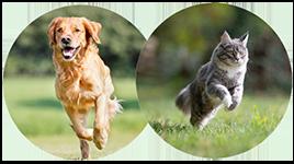 Cane e Gatto Test articolazioni